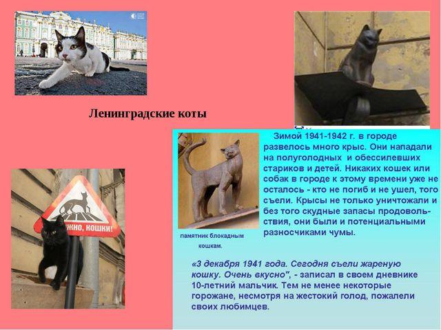 Ленинградские коты