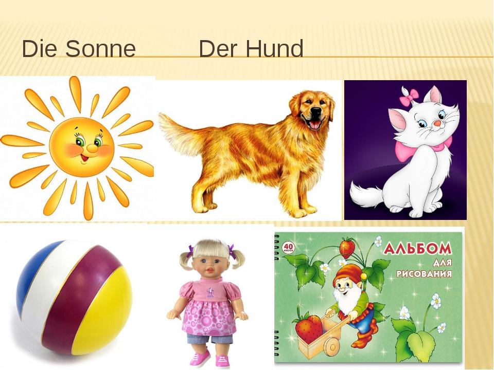 Die Sonne Der Hund