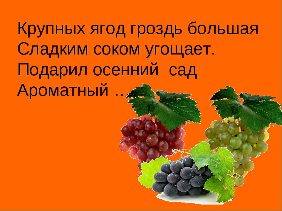 Крупных ягод гроздь большая Сладким соком угощает. Подарил осенний сад Аромат...