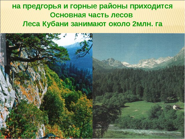 на предгорья и горные районы приходится Основная часть лесов Леса Кубани зани...