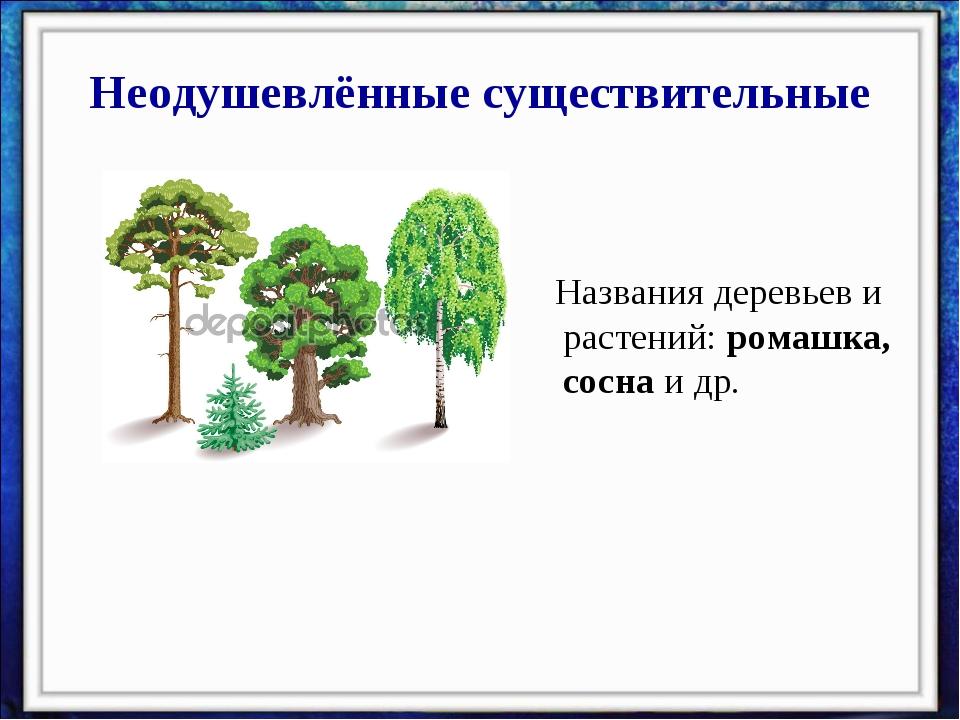 Неодушевлённые существительные Названия деревьев и растений: ромашка, сосна и...