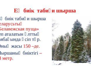 Ең биік табиғи шырша Ең биік табиғи шырша Беларусьтың «Белавежская пуща» деп