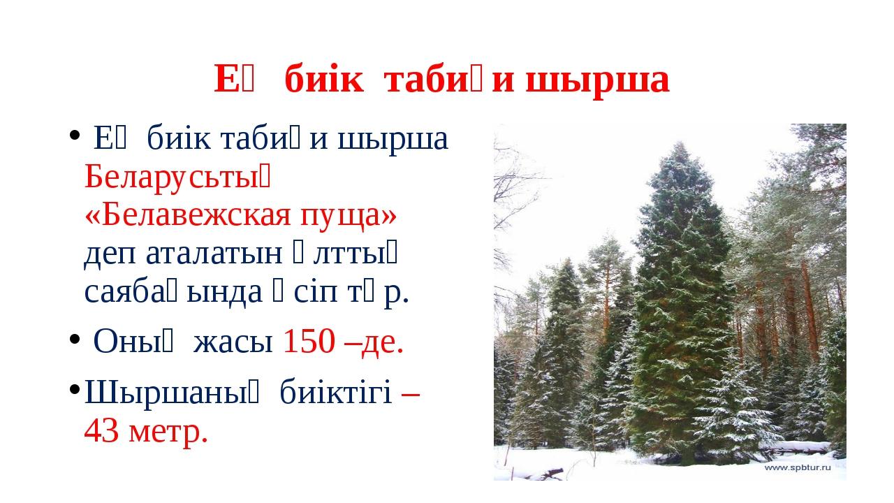 Ең биік табиғи шырша Ең биік табиғи шырша Беларусьтың «Белавежская пуща» деп...