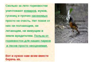 Сколько за летогорихвостки уничтожаюткомаров, жуков, гусениц и прочих насе