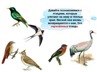 Давайте познакомимся с птицами, которые улетают на зиму в тёплые края. Весной