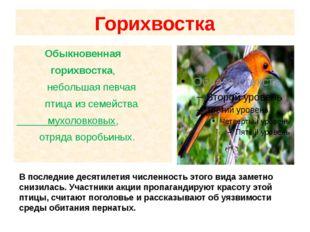 Горихвостка Обыкновенная горихвостка, небольшая певчая птица из семейства м