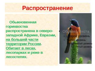 Распространение Обыкновенная горихвостка распространена в северо-западной Афр