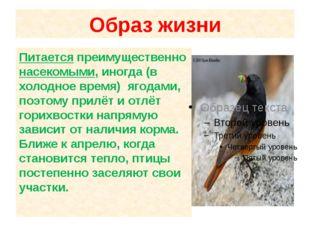 Образ жизни Питается преимущественно насекомыми, иногда (в холодное время) яг