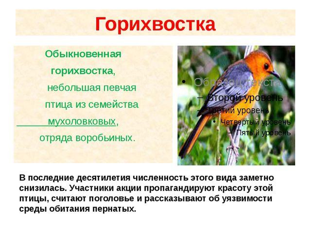 Горихвостка Обыкновенная горихвостка, небольшая певчая птица из семейства м...