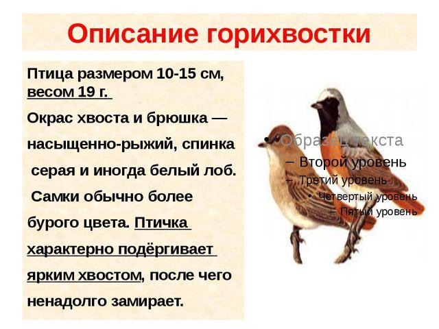 Описание горихвостки Птица размером 10-15см, весом 19 г. Окрас хвоста и брюш...