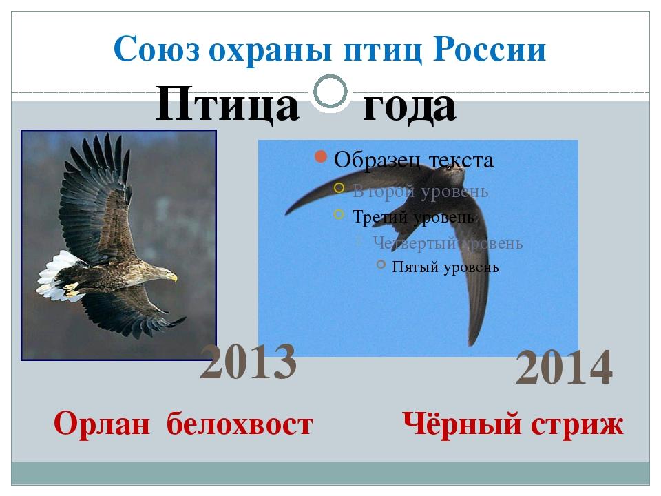 Союз охраны птиц России Птица года 2013 2014 Орлан белохвост Чёрный стриж