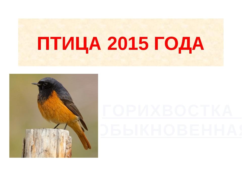 ПТИЦА 2015 ГОДА ГОРИХВОСТКА ОБЫКНОВЕННАЯ