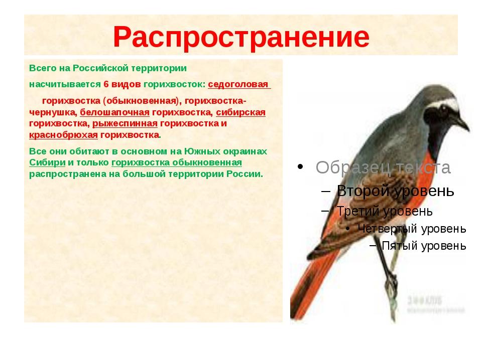 Распространение Всего на Российской территории насчитывается 6 видов горихвос...