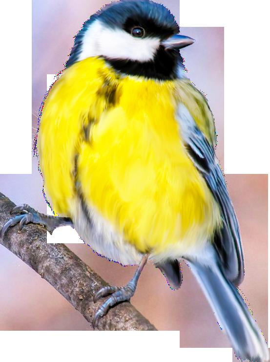 Открытка днем, картинка птицы для детей на прозрачном фоне