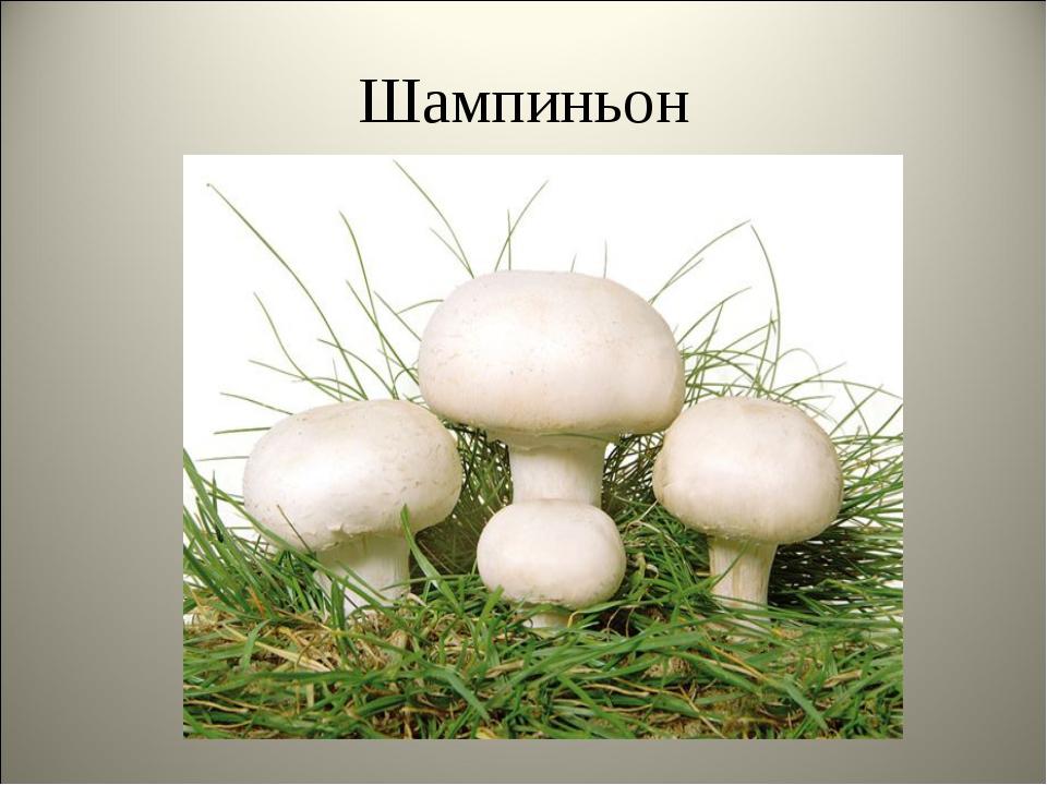 грибы шампиньоны картинки с описанием для обеспечения беспоисковой