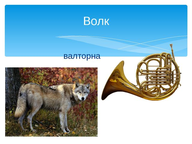 валторна Волк