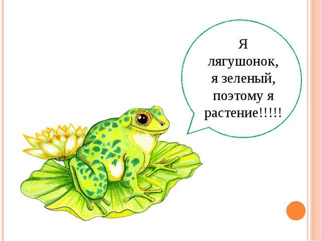 Я лягушонок, я зеленый, поэтому я растение!!!!!