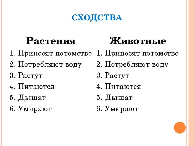 СХОДСТВА РастенияЖивотные 1. Приносят потомство1. Приносят потомство 2. Пот...