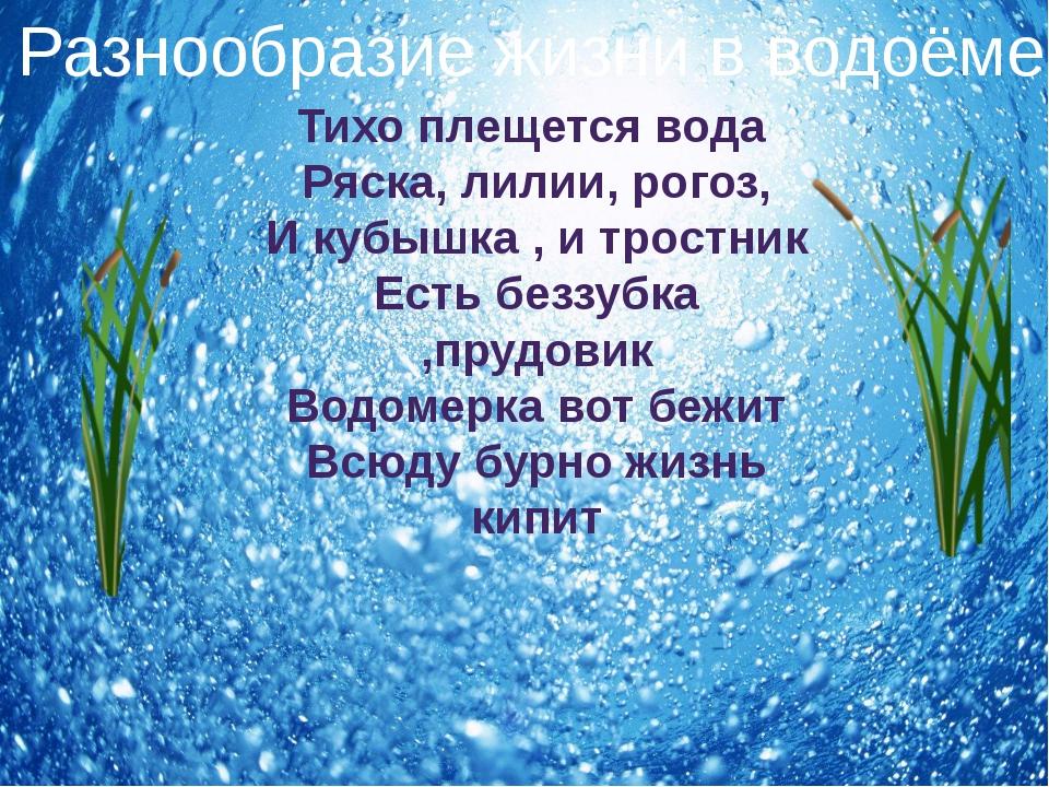 Тихо плещется вода Ряска, лилии, рогоз, И кубышка , и тростник Есть беззубка...