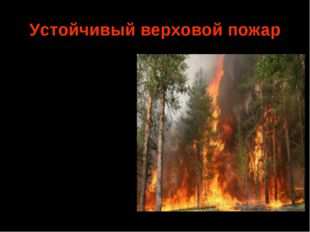 Устойчивый верховой пожар Горение крон деревьев и подстилки происходит одновр
