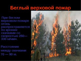 Беглый верховой пожар При беглом верховом пожаре огонь распространяется по кр