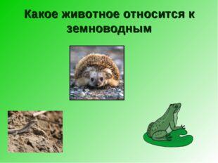 Какое животное относится к земноводным