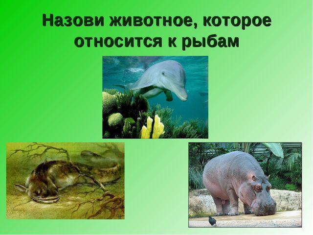 Назови животное, которое относится к рыбам