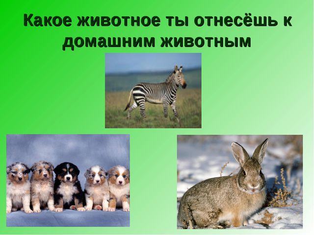 Какое животное ты отнесёшь к домашним животным