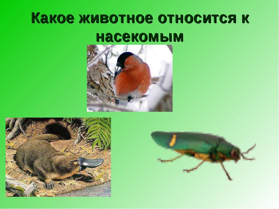 Какое животное относится к насекомым