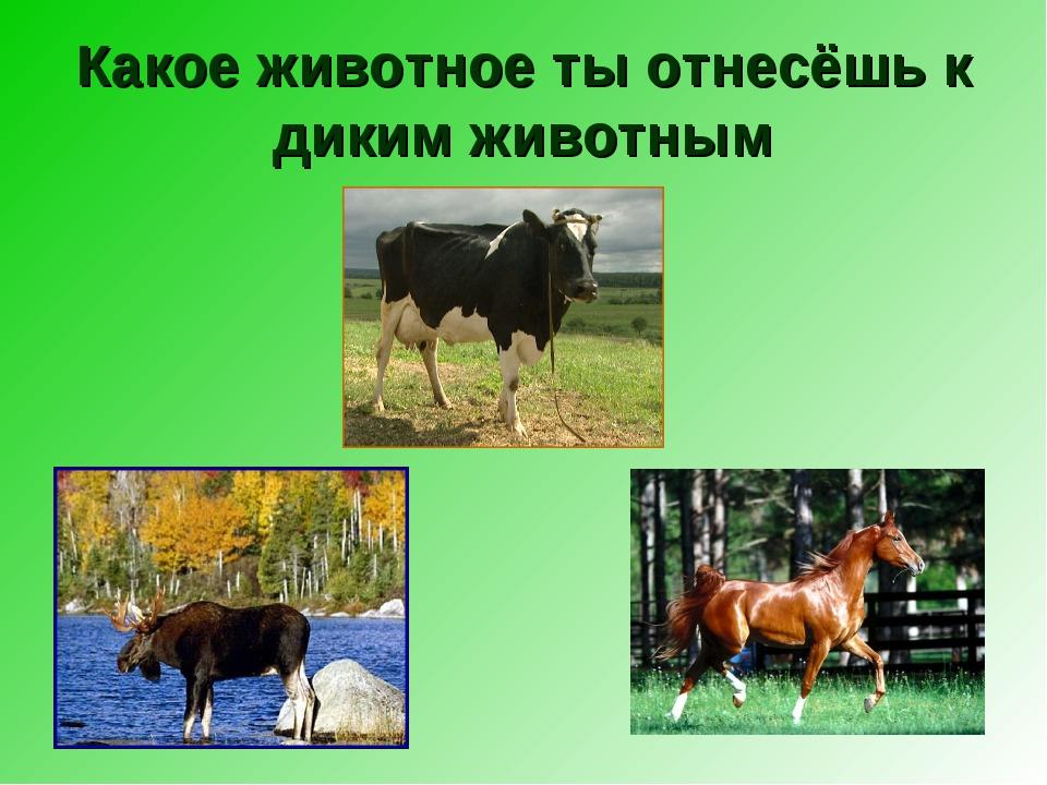 Какое животное ты отнесёшь к диким животным