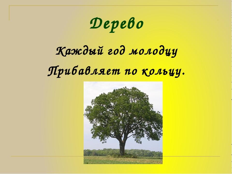 Дерево Каждый год молодцу Прибавляет по кольцу.