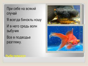 Рыба-телескоп При себе на всякий случай Я всегда бинокль ношу И в него сред