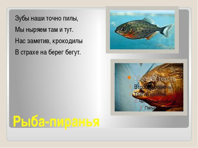 Рыба-пиранья Зубы наши точно пилы, Мы ныряем там и тут. Нас заметив, крокодил...