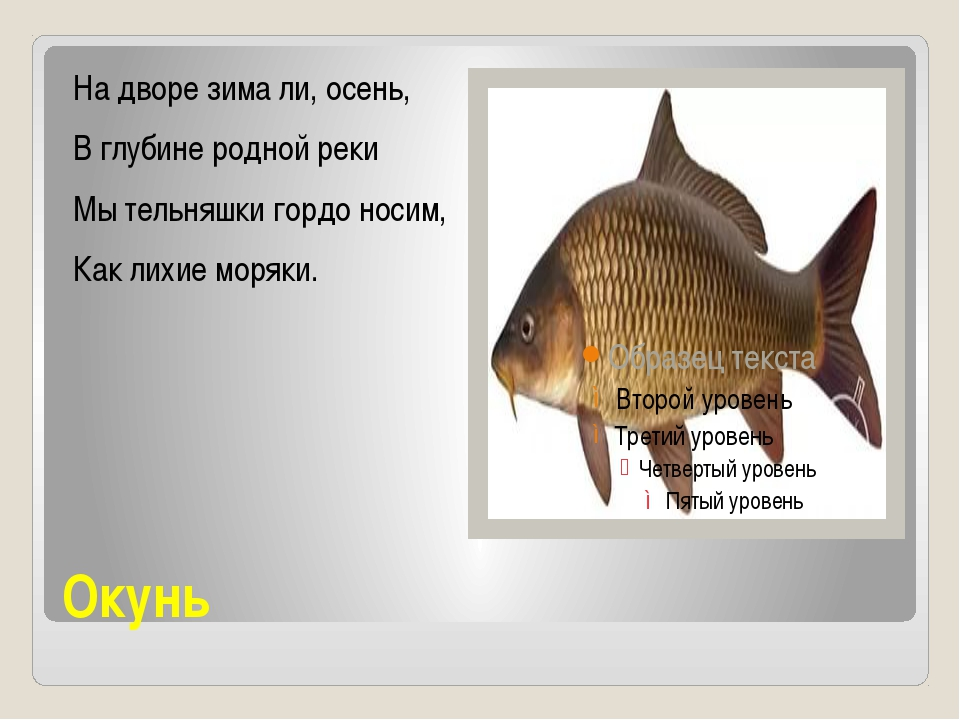 Окунь На дворе зима ли, осень, В глубине родной реки Мы тельняшки гордо носим...