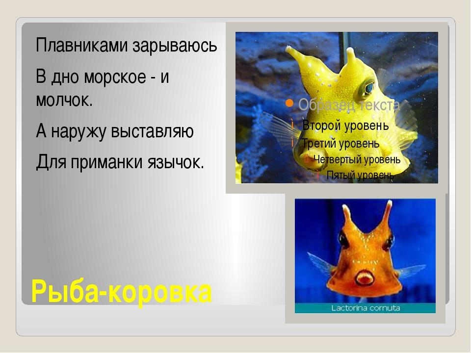 Рыба-коровка Плавниками зарываюсь В дно морское - и молчок. А наружу выставля...