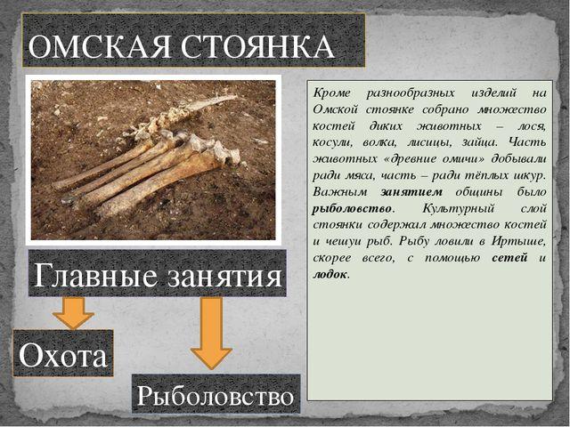 Кроме разнообразных изделий на Омской стоянке собрано множество костей диких...