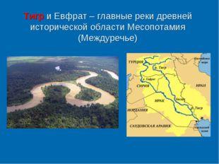 Тигр и Евфрат – главные реки древней исторической области Месопотамия (Междур