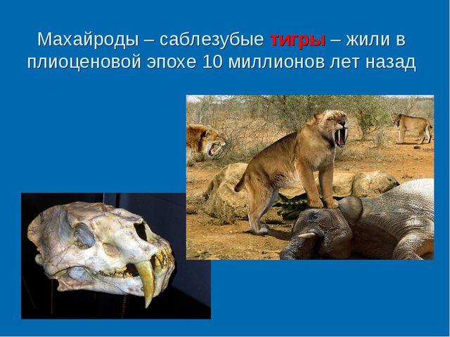 Махайроды – саблезубые тигры – жили в плиоценовой эпохе 10 миллионов лет назад