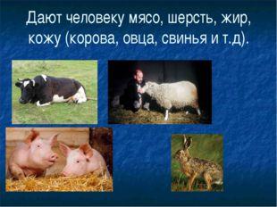 Дают человеку мясо, шерсть, жир, кожу (корова, овца, свинья и т.д).