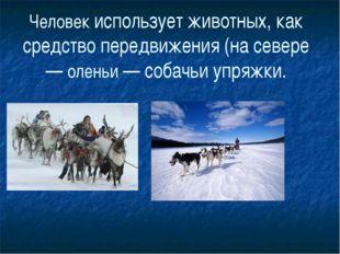 Человек использует животных, как средство передвижения (на севере — оленьи —