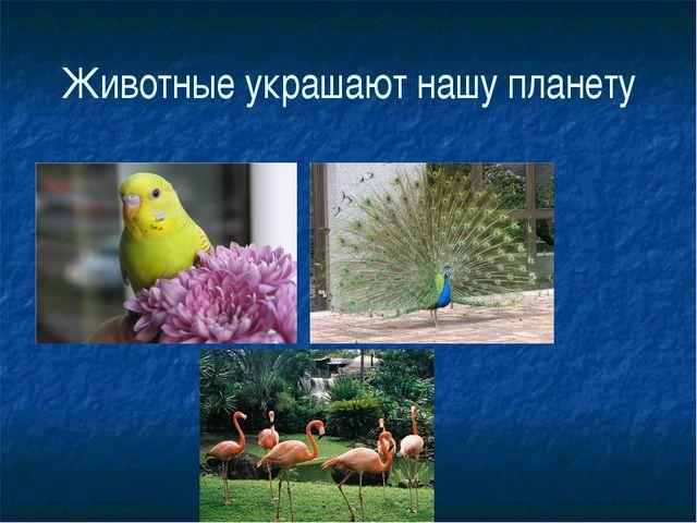 Животные украшают нашу планету