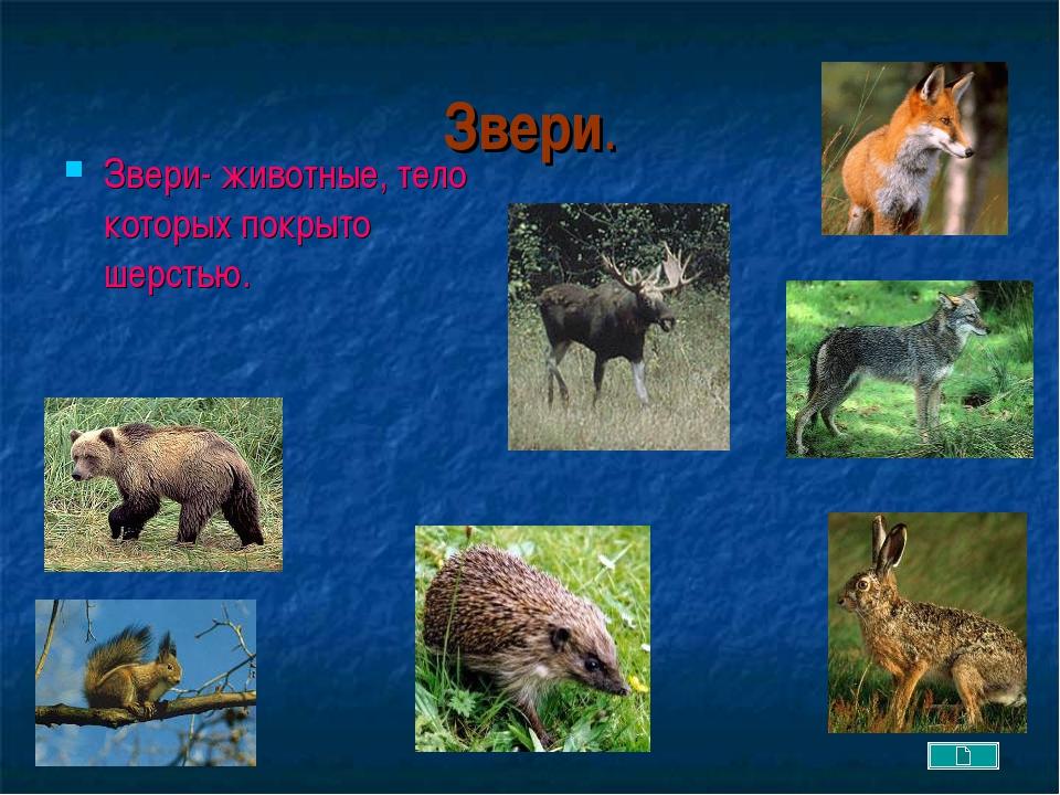 Звери. Звери- животные, тело которых покрыто шерстью.