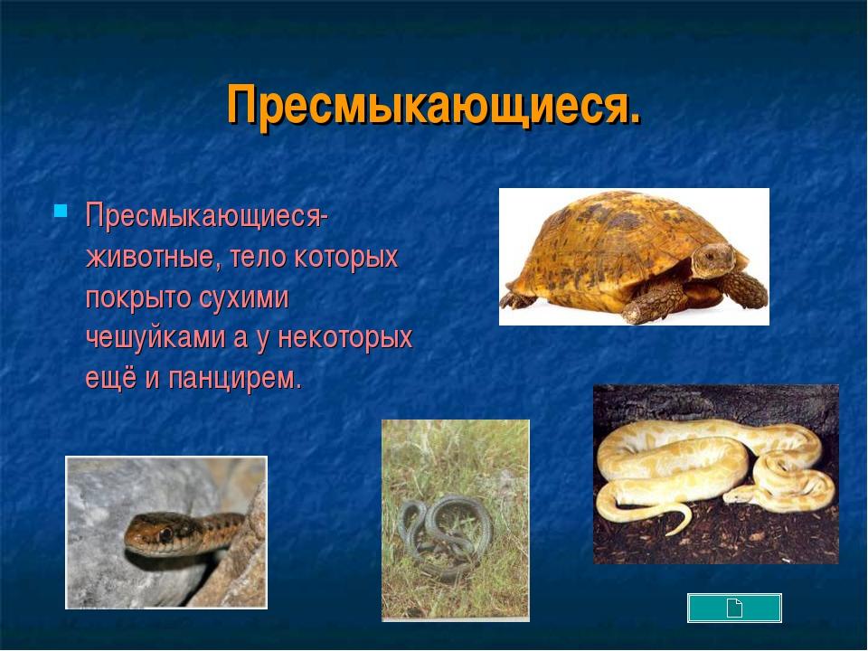 Пресмыкающиеся. Пресмыкающиеся- животные, тело которых покрыто сухими чешуйка...