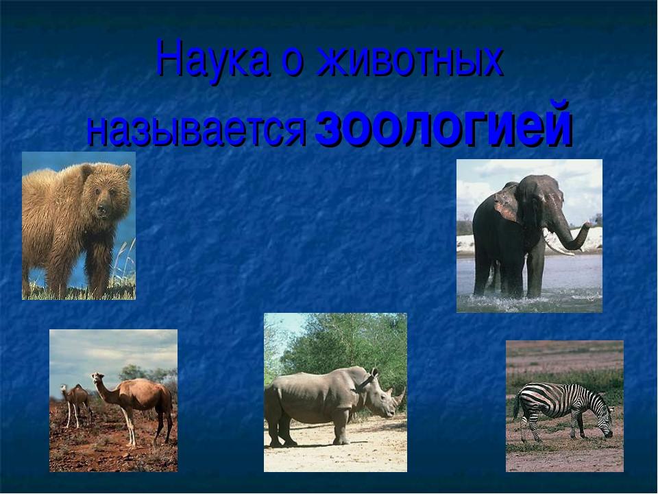 Наука о животных называется зоологией