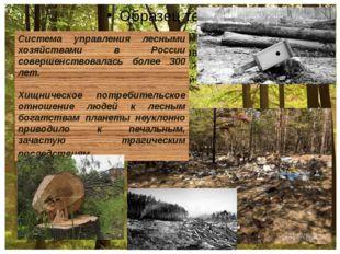 Система управления лесными хозяйствами в России совершенствовалась более 300