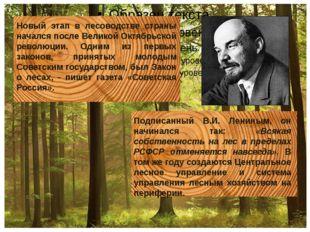 Новый этап в лесоводстве страны начался после Великой Октябрьской революции.