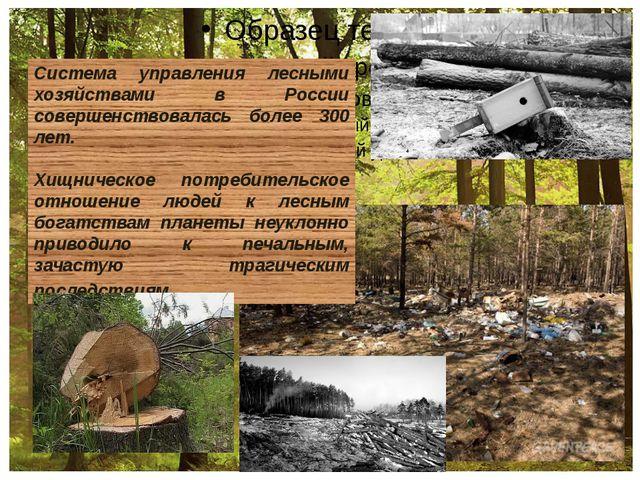 Система управления лесными хозяйствами в России совершенствовалась более 300...
