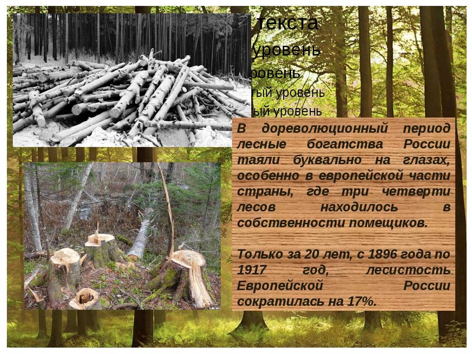 В дореволюционный период лесные богатства России таяли буквально на глазах,...