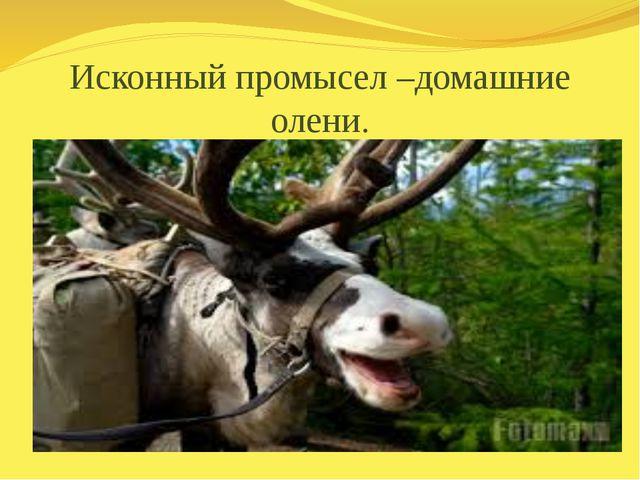 Исконный промысел –домашние олени.