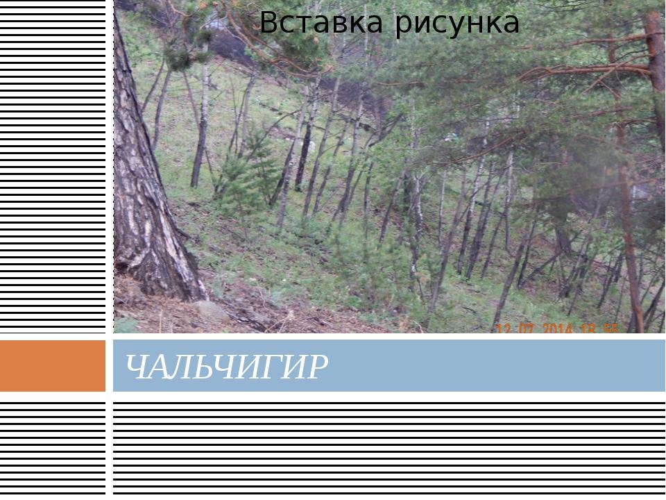 ЧАЛЬЧИГИР